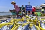 农业部拟推渔港港长制  渔获物将定港上岸