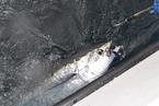 加加食品47亿收购金枪鱼钓引起深交所关注