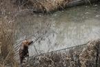 环境部:36城新发现黑臭水体221个 占比三分之一
