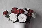 PD-L1抑制剂:白玫瑰与红玫瑰