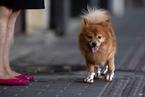 孔德峰:毒狗分歧大,不是因狗分裂而是规则失衡