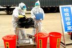 多家上市养殖企业称暂未发现非洲猪瘟疫情