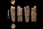 尼安德特人与丹尼索瓦人第一代混血儿被发现