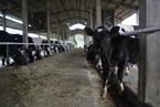 专家:环保风暴将严重影响奶源供应