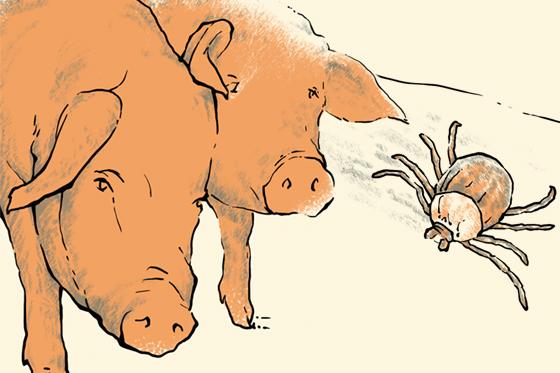 互动|非洲猪瘟疫情追踪