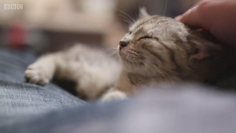 猫咪和鸟类动物的灭绝有关系吗?