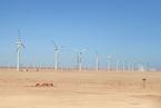 研究:大规模清洁能源或能绿化撒哈拉沙漠