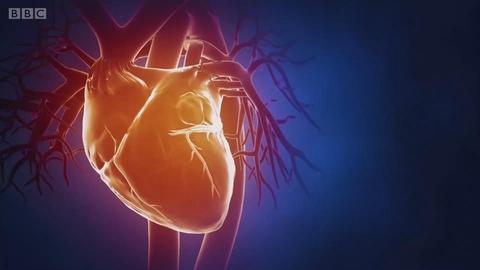 胆固醇只有致心脏病的负面作用吗?