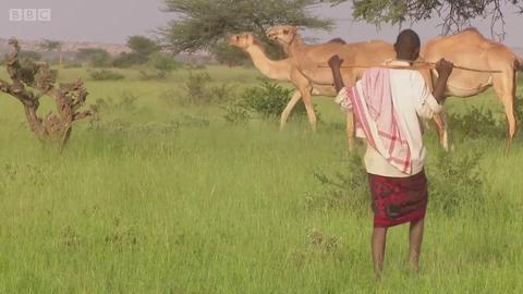 骆驼如何能让人致富?
