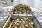 环保组织:洪泽湖污染事件污染源或在宿州境内