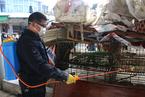 湖南凤凰暴发H5N6禽流感 疫区未发现禽传人