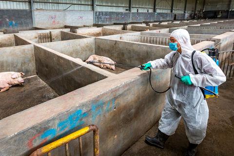 江西云南四川各排查出一起非洲猪瘟疫情