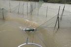 长江豚类保护区两年未整改 镇江市长被约谈