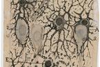 神经科学之父与美丽大脑