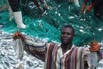 环保组织指称中企在加纳大规模违法捕鱼