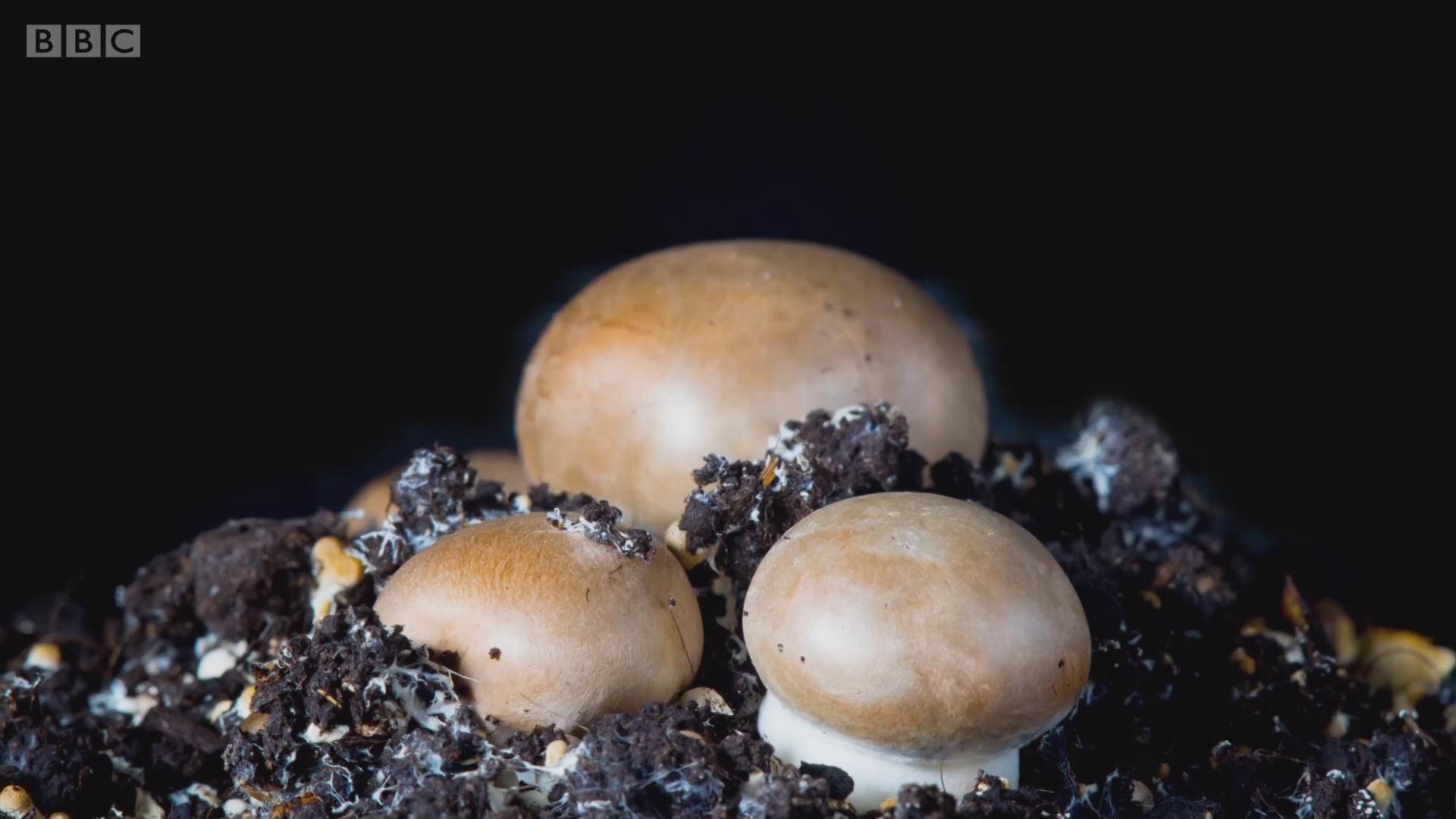 如何用蘑菇改善能源结构?
