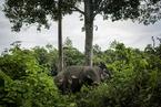 动物学家:盗猎压力下非洲象向无牙方向进化