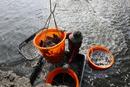 濒危物种红色名录更新 过度捕捞危及食品安全
