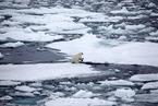 研究:海洋升温计算有误 但幅度仍超出预计
