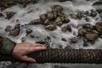 研究:中国冰川消融退缩加速致灾害频发