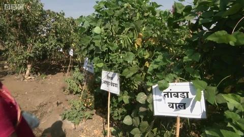 培育百余种天然种子的印度女性
