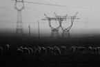 能源内参 甘肃、山西电力现货市场试运行启动;联合石化两高管因工作原因停职