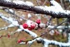 中国气候指数报告:1月西南冷东北暖