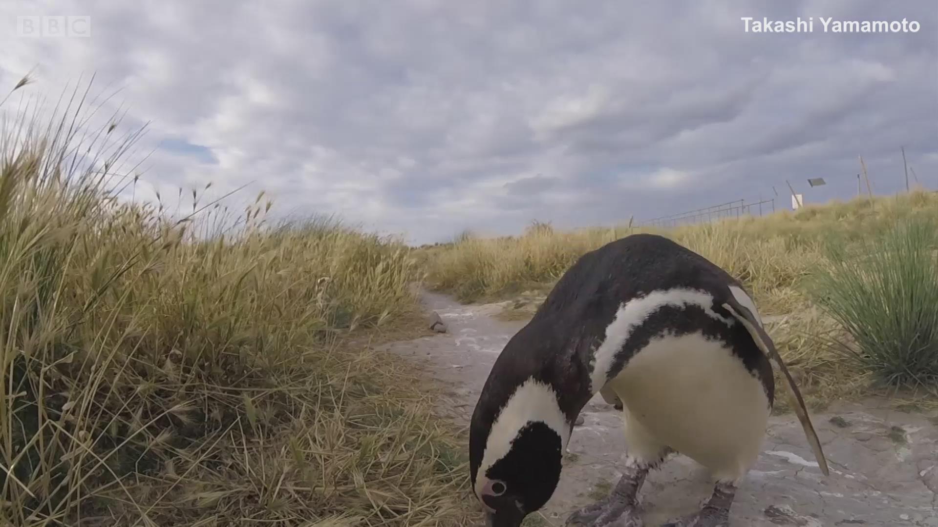 遭遇困境的企鹅