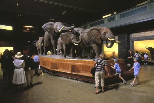 大象成为保护对象前