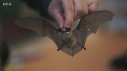 在冰箱里过冬的蝙蝠