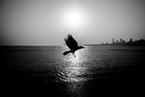 显影 | 印度的河,神圣且忧伤