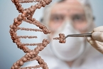 美科学家合成8碱基DNA 应用前景令人兴奋