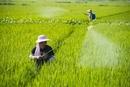 农药林丹、硫丹将全面禁止 有毒化学品PFOS被限定用途