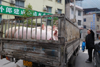 Cost of China's Favorite Meat Set to Soar as Swine Fever Hits Supply