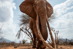 Ivory Seizures in China Soar Despite Ban