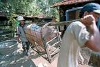布局越南生猪养殖 新希望投资11亿元