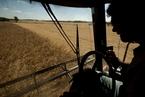 中美贸易纠纷再起 美国豆农情绪悲观