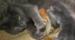 一只和猫共同生活的松鼠