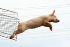 农业农村部:4月生猪存栏同比减20.8%  能繁母猪同比减22.3%