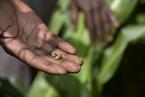 生物入侵威胁中国农业  秋行军虫已现13省(区)