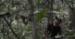 犀鸟盗猎者的自述
