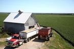 美国农场主收入下滑 农民处境雪上加霜