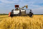 农业劳动生产率是城乡融合发展的基础