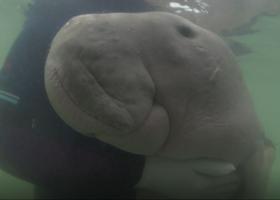 能俘获人心的海洋动物