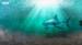 我们能从鲨鱼身上借鉴什么?