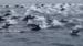 海豚也爱玩