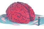 心智 大脑的成见