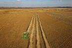 开放俄罗斯全境大豆进口 中国豆农已赴远东种豆