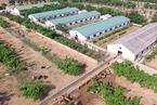 自然资源部再发通知 养猪场不需办理建设用地手续