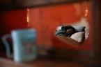 Questions Swirl Around China's New Alzheimer's Drug